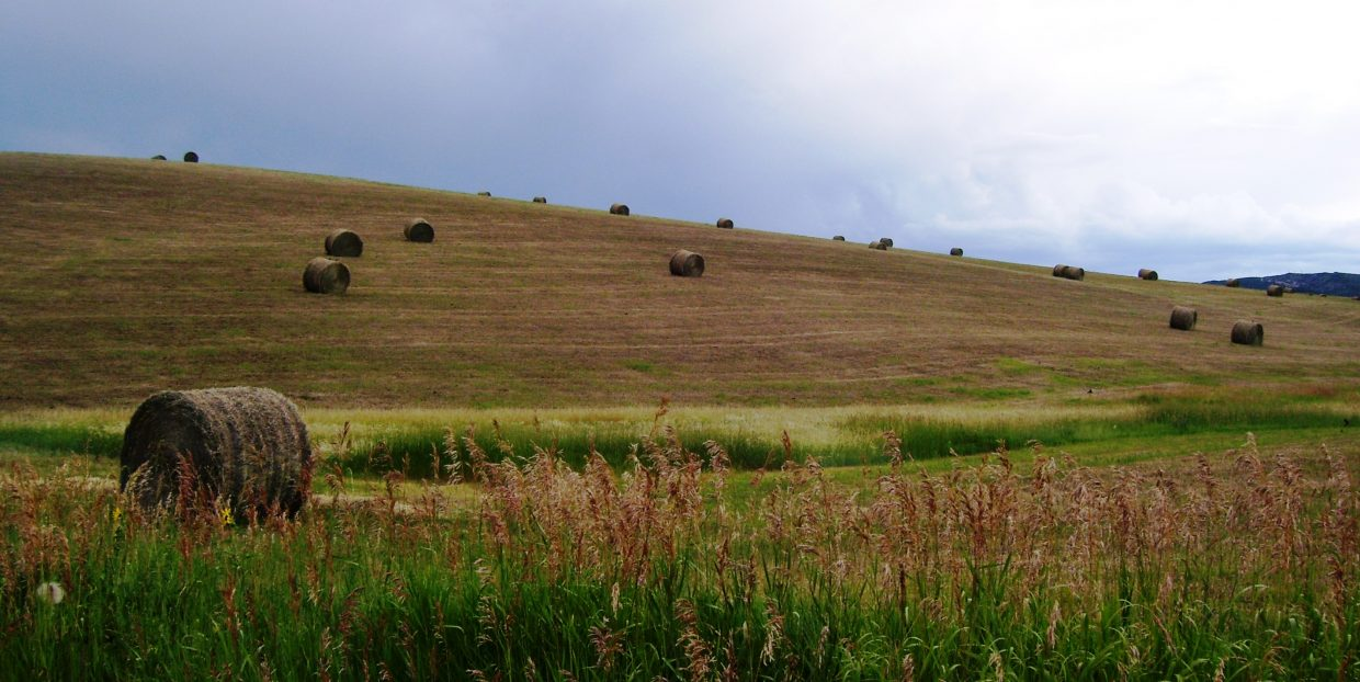 Hay and alfalfa are two of our major agricultural commodities in Routt County. More than 37,000 acres produce more than 60,000 tons annually.