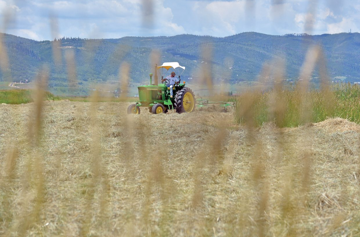 Rancher John Burrow rakes a hay field south of Steamboat Springs on Thursday afternoon after Wednesday evening's heavy rains. No doubt that the rain put a damper on local ranchers efforts to put up hay this week.