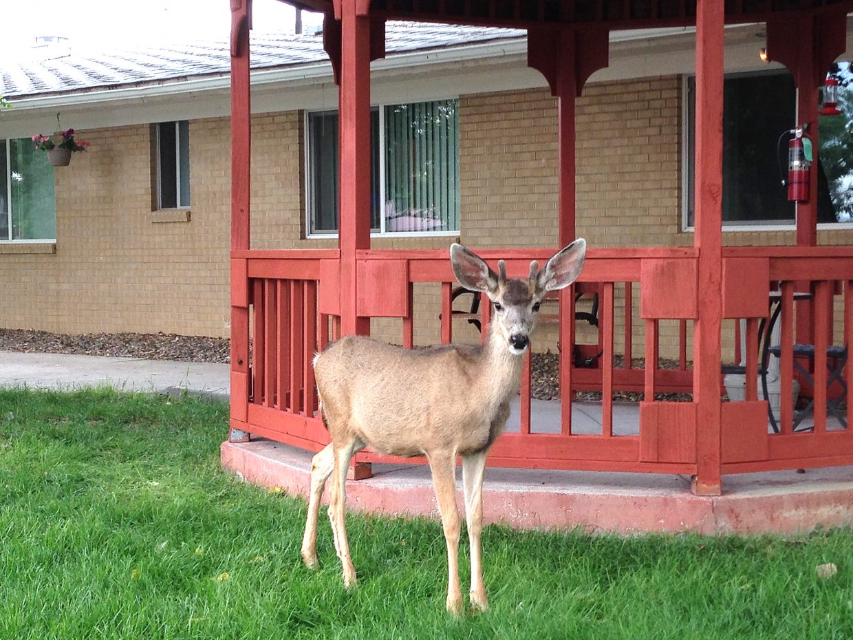 Norman Ronda snapped this photo of a deer at Sandrock Ridge Care & Rehab on July 6. Do you have a photo you'd like to see printed in the newspaper? Send submissions to editor@CraigDailyPress.com.