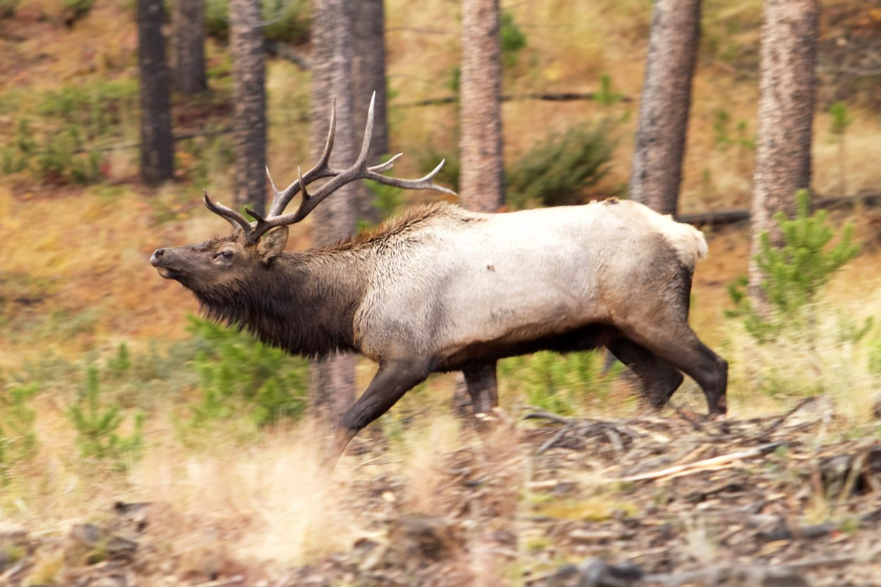 Hunting season is underway. Here's what you need to know