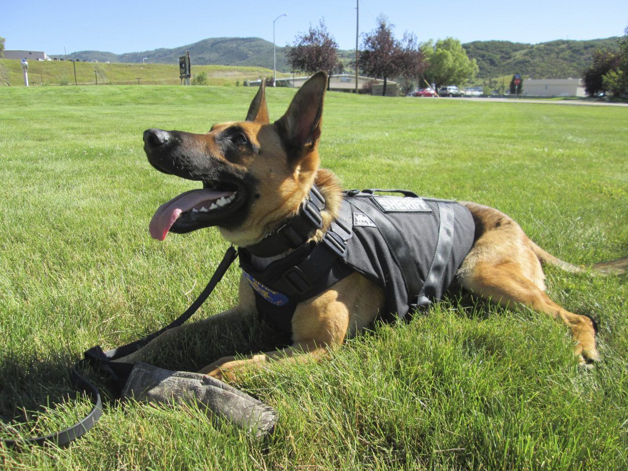Boomer, the Routt County Sheriff's Office K-9, recently received his bullet-proof vest. Community members donated $2,000 so Boomer could get the protective vest, which cost $1,200. The remainder of the donations will be used for regular vet check-ups, food and vitamins.