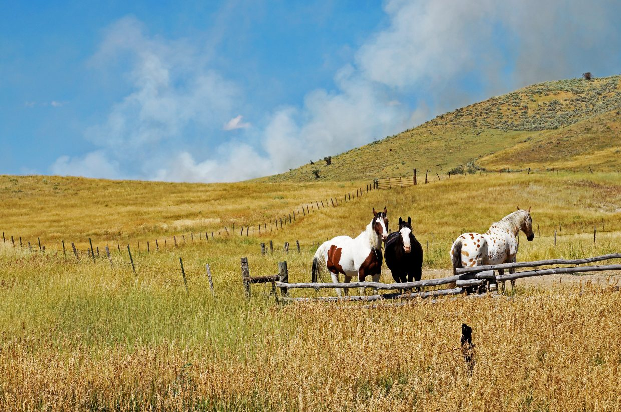 Horses go about their business as a plume of smoke from a fire to the southwest of Elkhead Reservoir rises behind them.
