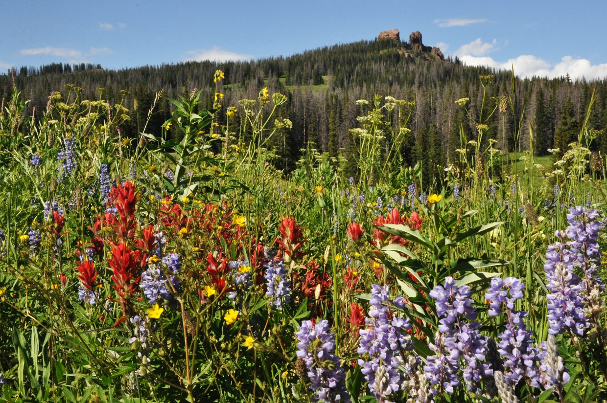 You'll have plenty of opportunities to frame Rabbit Ears Peak with an assortment of spectacular wildflowers along the trail at this time of year.