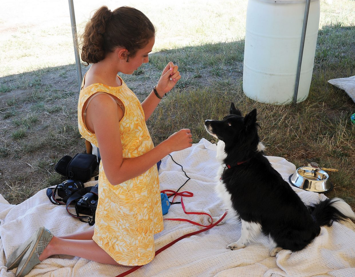 Elise Barbier gives her dog Olive a treat after the showmanship class at the Routt County Fair's dog show Tuesday afternoon. The members of the 4-H dog program have been working with their dogs all summer, and on Tuesday, they got the chance to compete for ribbons and titles. Or in Olive's case, treats.