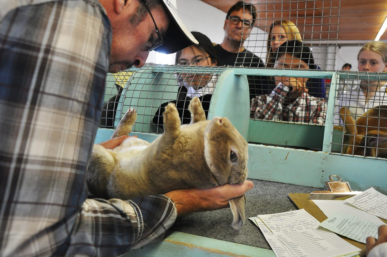 A rabbit is judged by Nate Crozier Thursday afternoon in front of a crowd at the Routt County Fair.