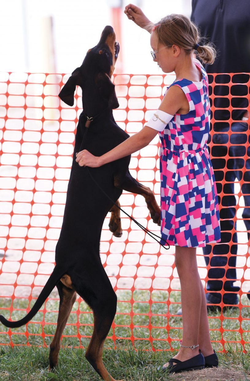 Carson Gerstell and her dog Luxman, a black and tan coon hound, work during the showmanship portion of the dog show at the Routt County Fair Tuesday morning. Young 4-H members have spent the summer working with their dogs and were hoping to bring home a ribbon from this year's fair during Tuesday's competitions.