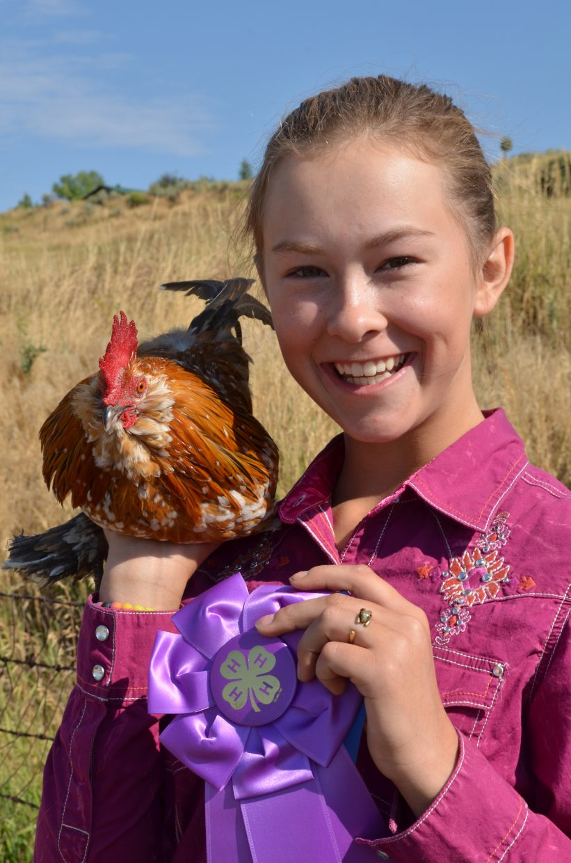 Dyllan Spitzley, 13, of Clark, claimed the grand champion ribbon in the Poultry Showmanship intermediate class at the Routt County Fair Aug. 17 with a little red rooster named Count Dooku after the Star Wars character.