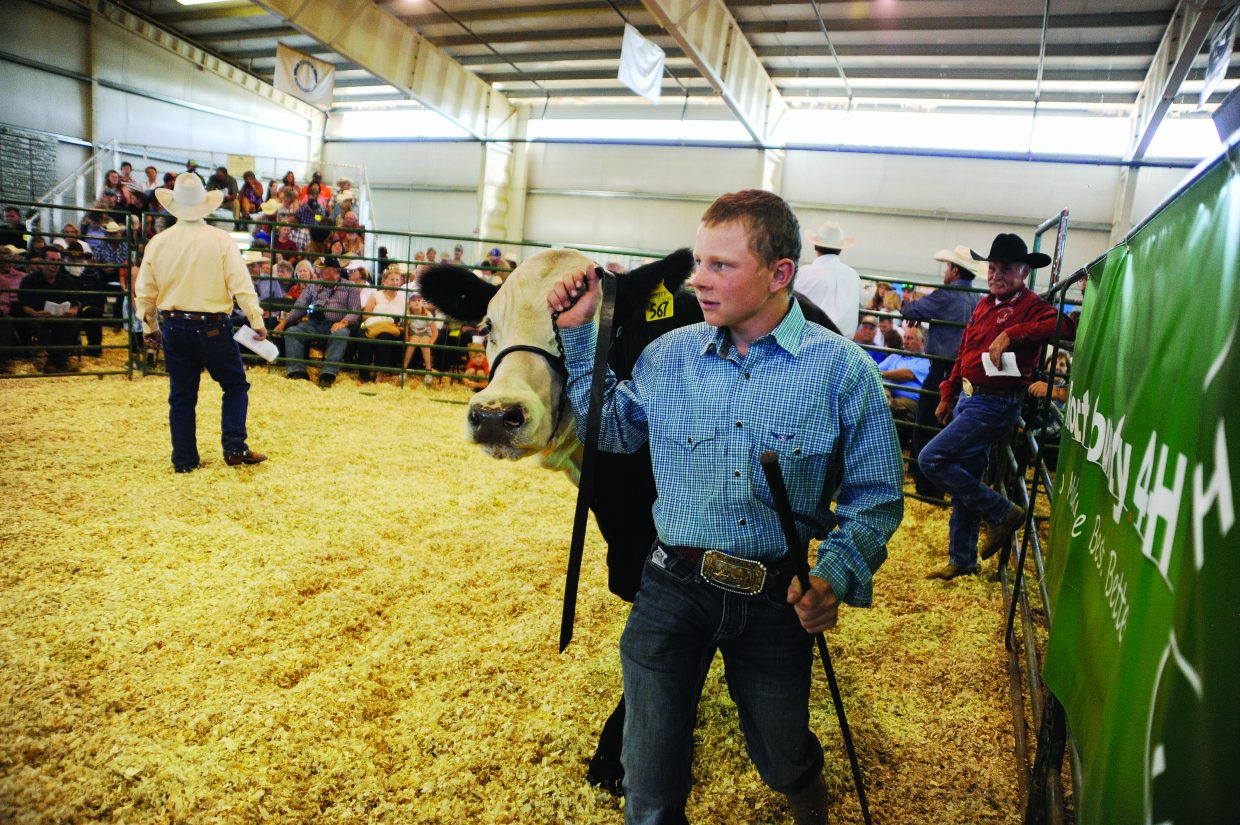 Cody Logan shows his steer during the Junior Livestock Sale at the Routt County Fair in Hayden on Saturday.