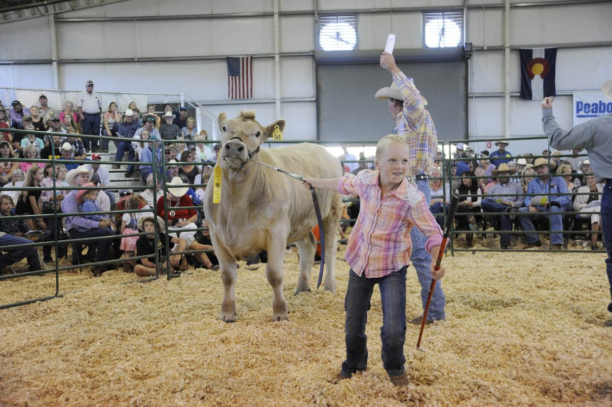 Alivia Warren shows her steer during the Junior Livestock Sale at the Routt County Fair in Hayden on Saturday.