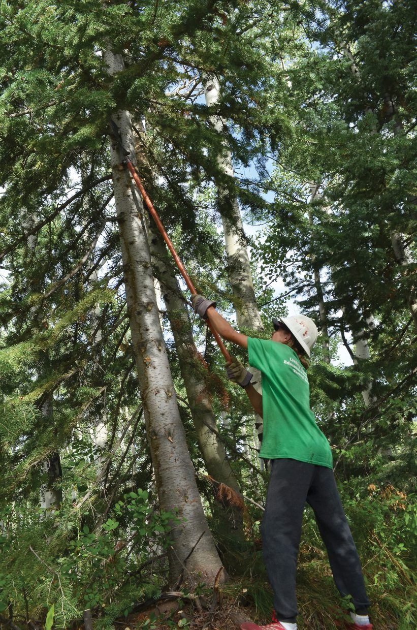 A member of Rocky Mountain Youth Corps prunes a tree.