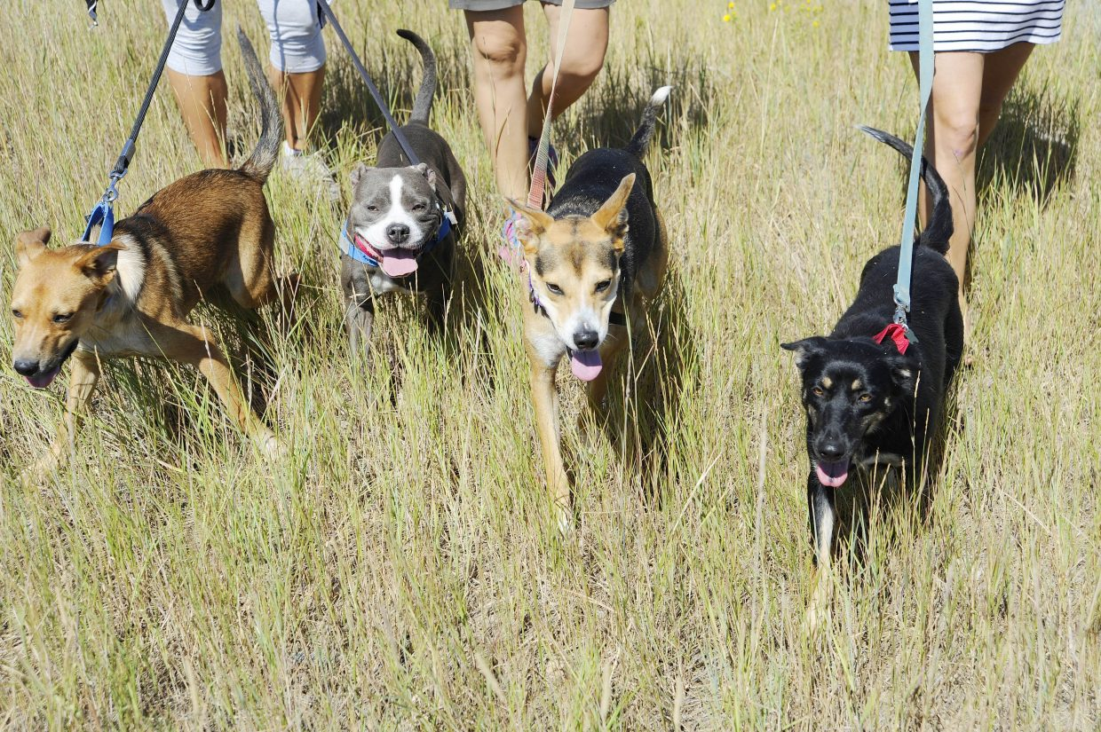 Since the Routt County Humane Society took over the animal shelter from the city of Steamboat Springs in May 2015, the shelter has taken in about 16 animals from other communities.