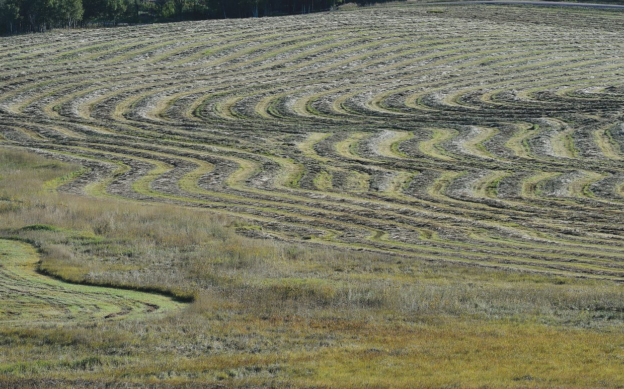 Freshly cut hay lays in rows waiting to be bailed Thursday morning in the shadows of Buff Pass.