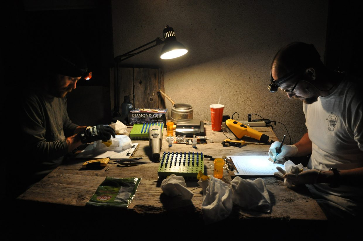 Bat researchers Jeremy Siemers, left, and Rob Schorr place transponders in the wings of bats at the Rehder Ranch.