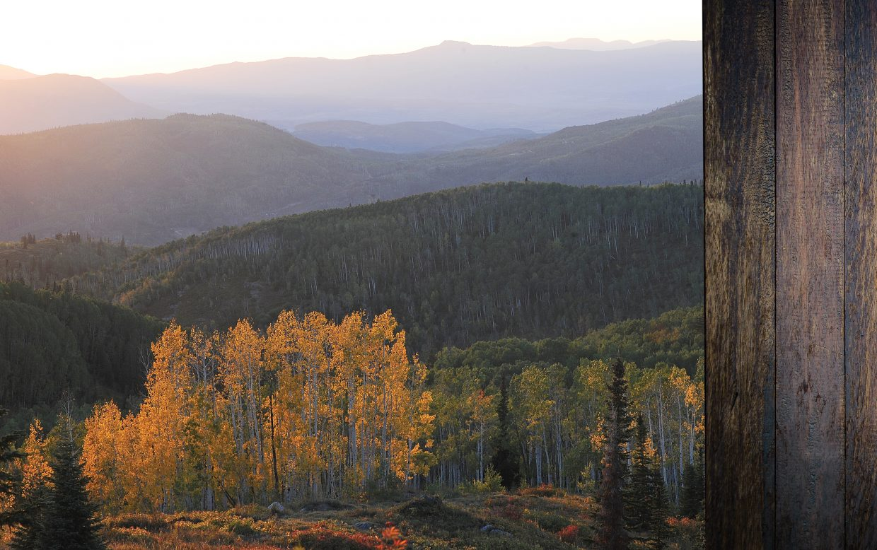 A stand of golden aspens shines at sunset on Buffalo Pass in the Yampa Valley.