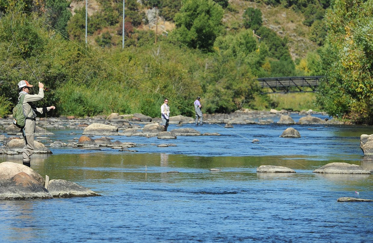 On the line: A fisherman pulls hard after hooking a trout Saturday while working a busy stretch of the Yampa River in downtown Steamboat Springs.