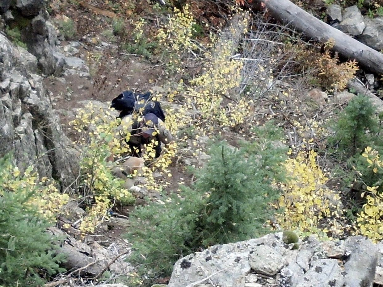 Colorado Parks and Wildlife ranger Robert Seel works to rescue a dog named Baxter on Tuesday afternoon after the dog slipped down a steep ravine.