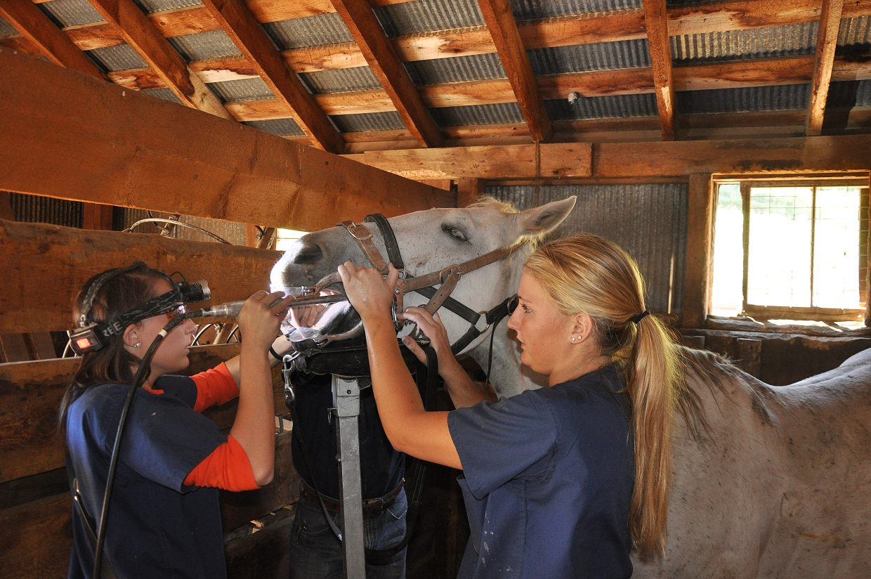 Kaylin Jones, left, and Cheyenne Davenport perform a dental procedure on a horse at Sombrero Stables in Steamboat Springs.
