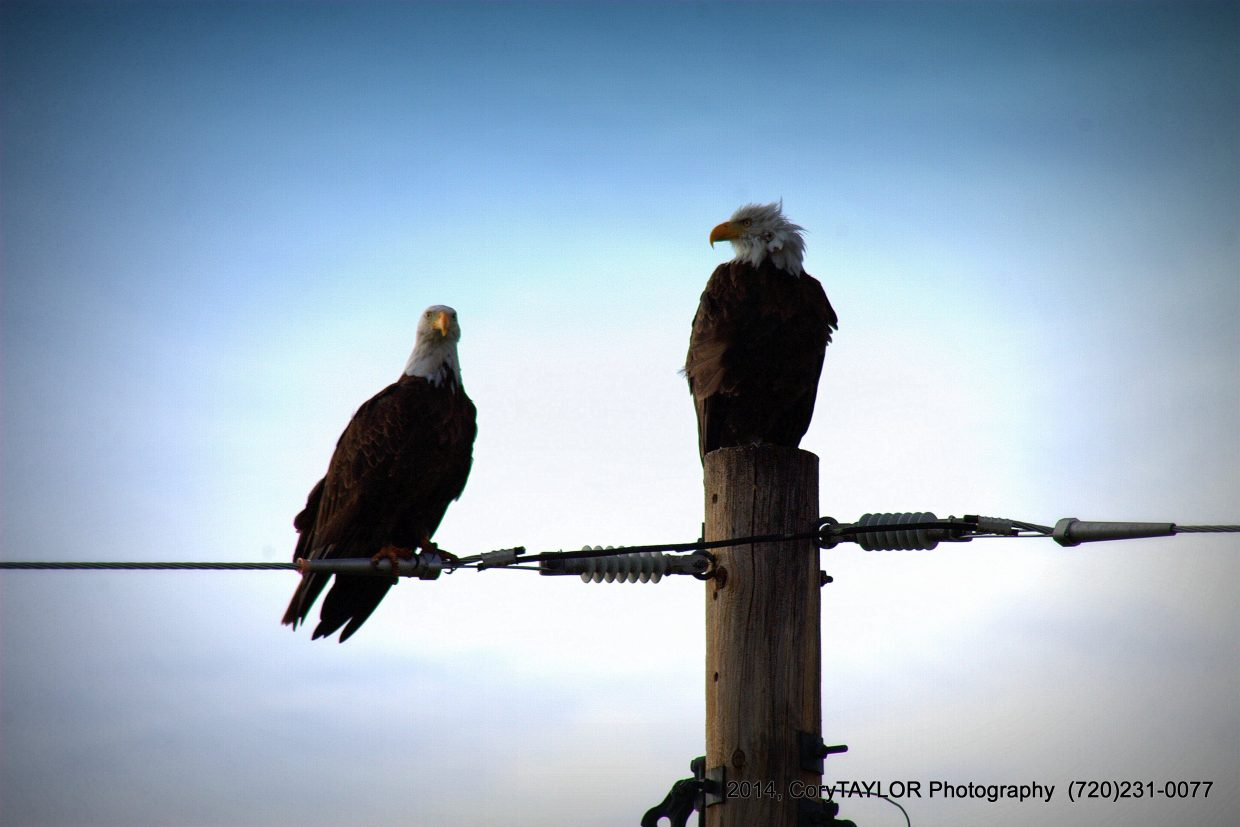 Two Bald Eagles at Stagecoach State Park. Submitted by: Cory Taylor