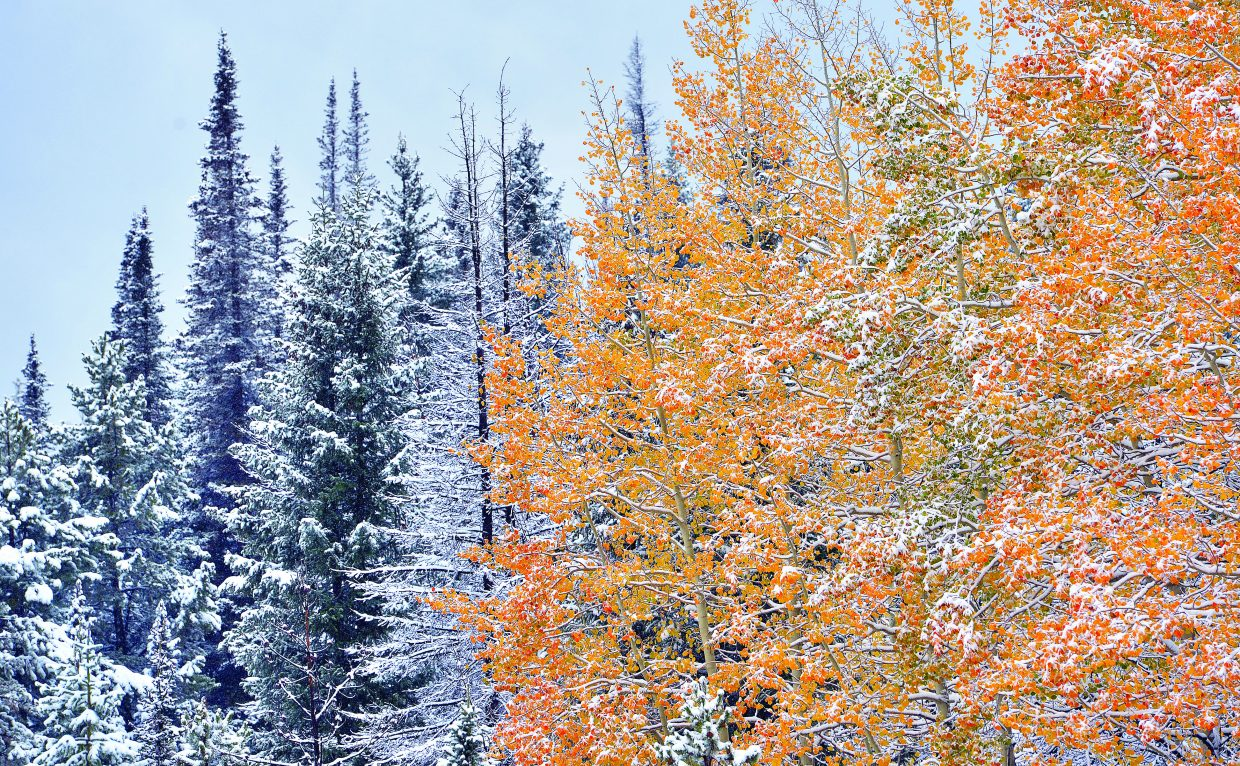 Snow and color collided on the top of Rabbit Ears Pass on Wednesday afternoon as a storm passed through the area, dumping several inches of snow in areas of Routt County.
