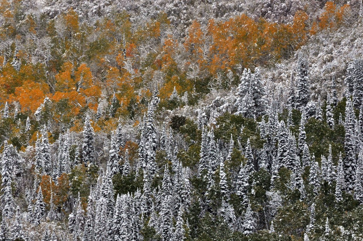 Snow covers a colorful Emerald Mountain on Friday morning after 10 inches of snow fell in Steamboat Springs.