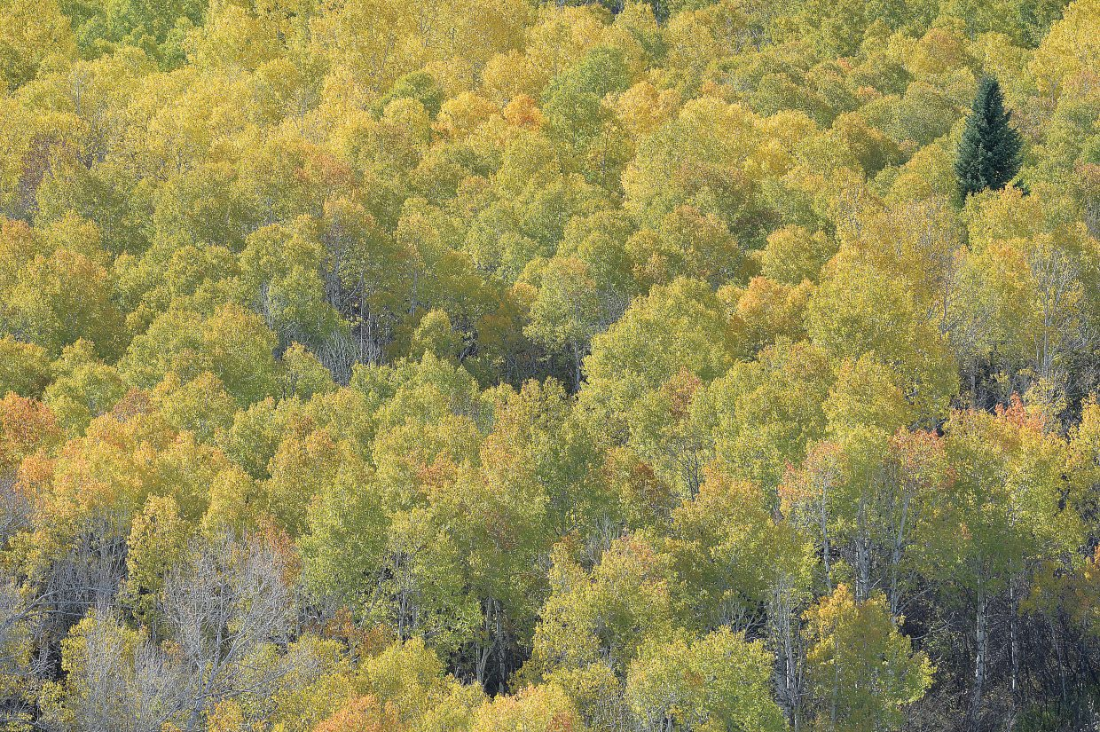 This hillside near Steamboat Springs was a patchwork of green and yellow. While many of the trees in the area have already lost their leaves, patches of color are still easy to find.