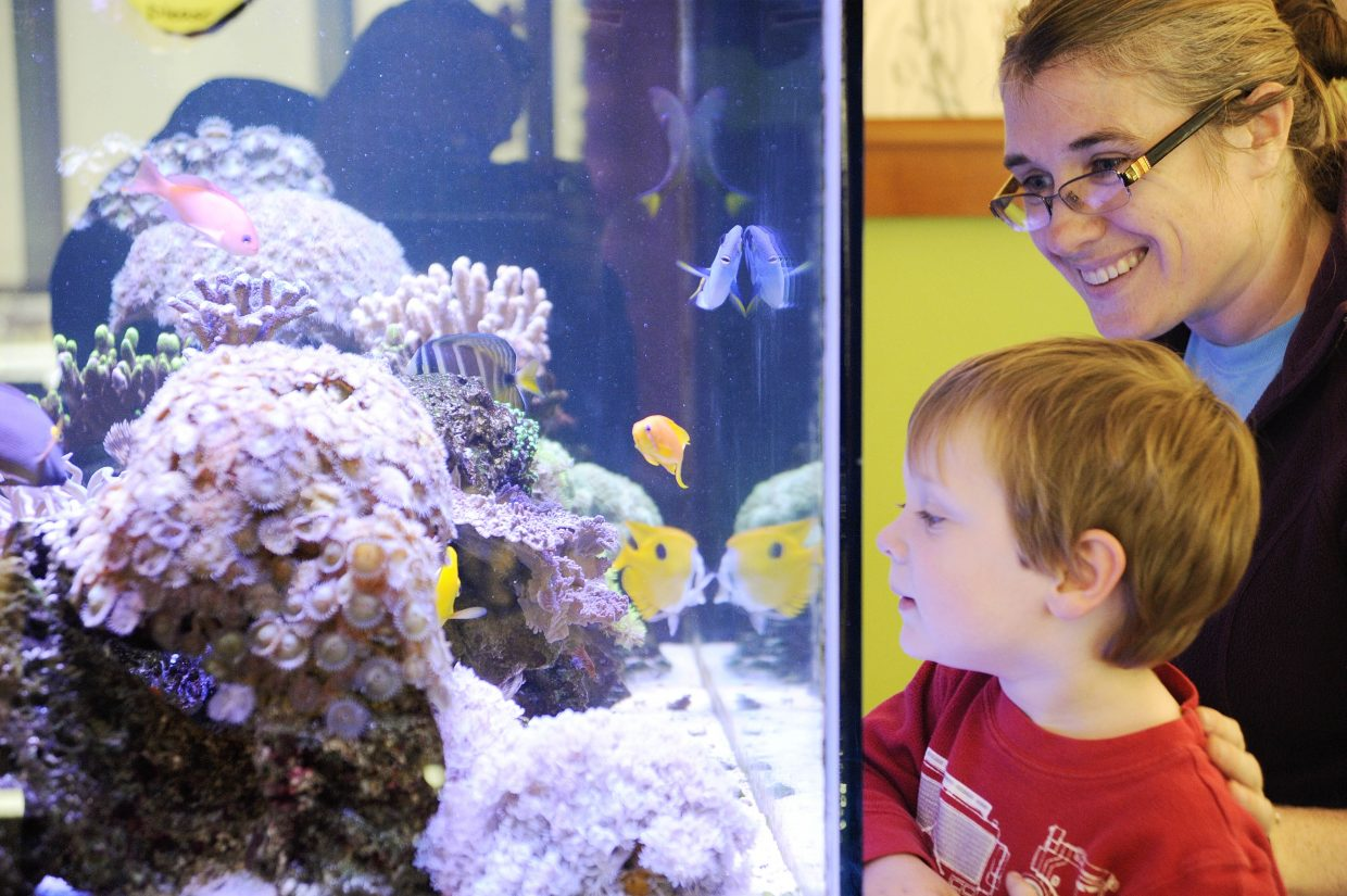 Two-year-old Jeremiah Hixson is fascinated by the fish tank at the Bud Werner Memorial Library on Friday with his mom Michelle. The family was visiting Steamboat Springs.
