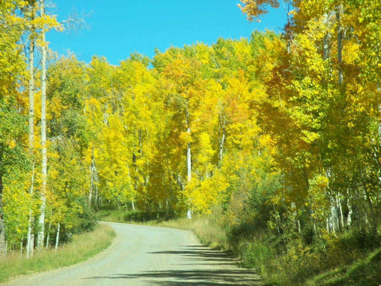 There's gold in the Routt National Forest! Submitted by: Sandy Martin