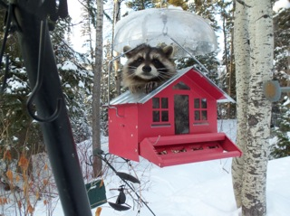 I'm stuck and I can't get out. It took this little guy awhile to get himself out! Submitted by: Sue Swigert