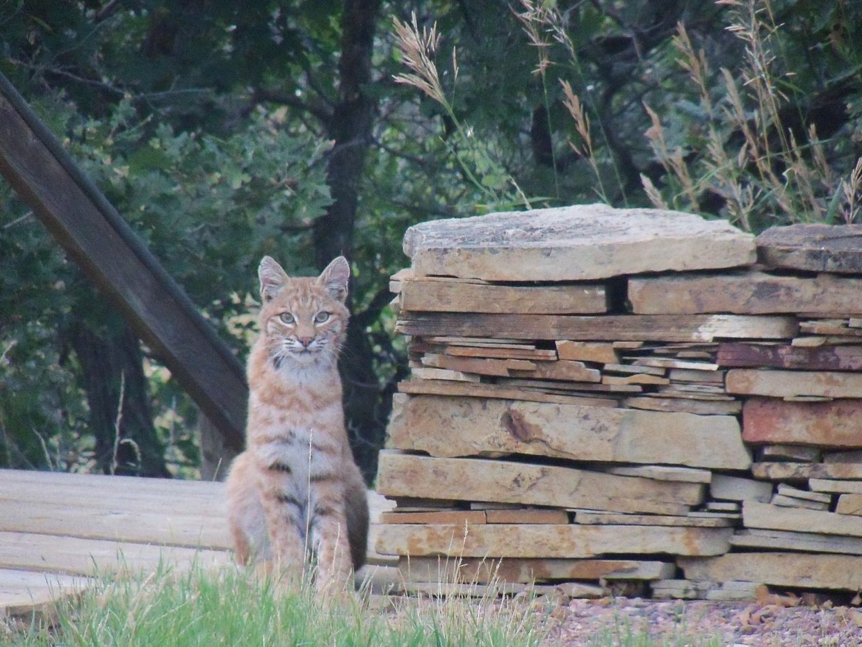 Nate Kelley spotted a new friend in his back yard. Submitted by Janet Fischer.