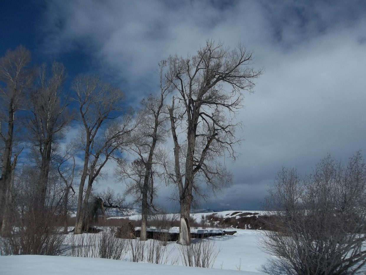Winter next to the Elk River. Submitted by William James Dorr.