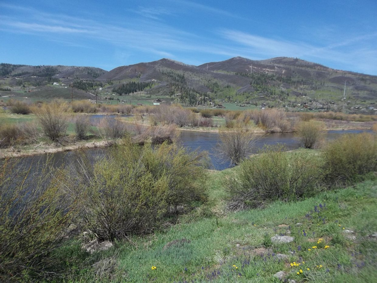 Walton Creek hits the Yampa River, with wildflowers. Submitted by: Bill Dorr