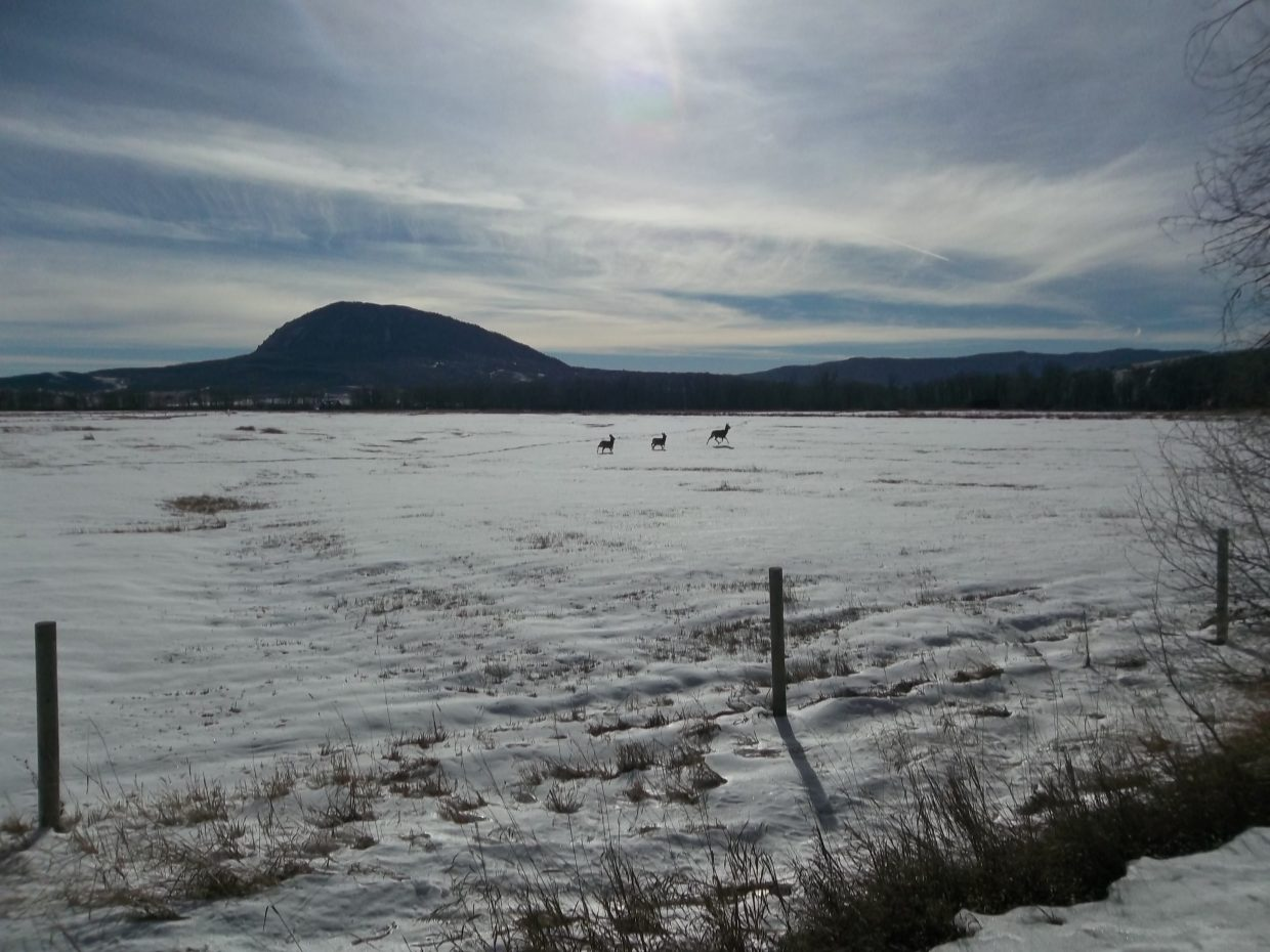 """I see the Coolest Stuff "" ... off RCR 54. Elk Mountain, a aeer, with twins. 11-24-14. Photo submitted by Bill Dorr."