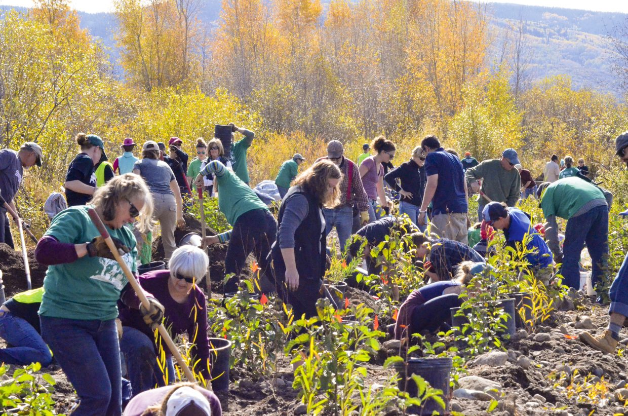 Volunteers work to plant trees along the banks of the Yampa River in Chuck Lewis State Park on Saturday as part of the seventh annual ReTree Community Planting Day. An estimated 93 volunteers, plus staff members from Colorado Parks and Wildlife and the Yampa Valley Sustainability Council, were on hand to participate in the event. The group planted approximately 200 willow trees and 110 alder trees, both native, riparian species, along the riverbank.