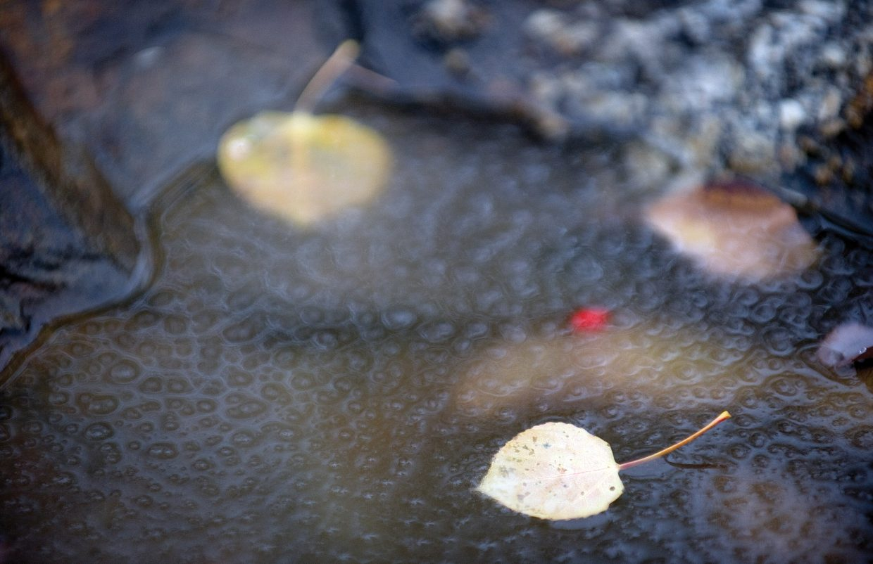 A fallen Aspen leaf sits on a nearly frozen pond of water Friday morning near Fish Creek. The latest storm began Thursday night with lower temperatures and rain, and by Friday morning, snow was falling at higher elevations.