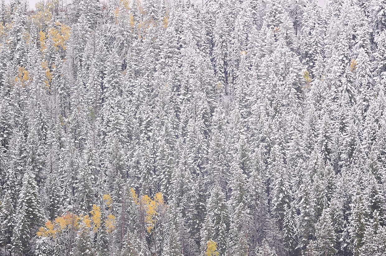 Snow covers the pine trees near The Sanctuary subdivision in Steamboat Springs on Monday afternoon.