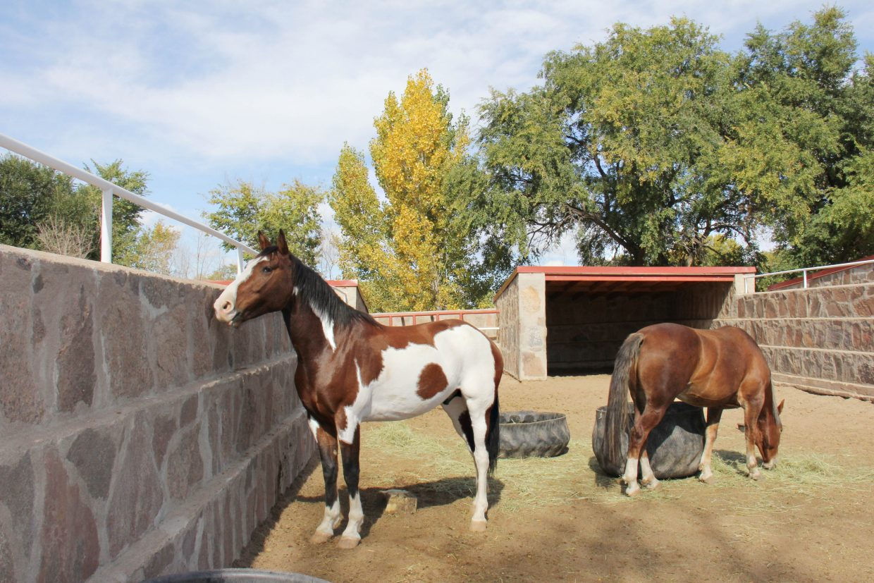 Once wild horses removed from the range and living at the Canon City holding and training facility with about 2,000 other horses await processing and/or adoption.