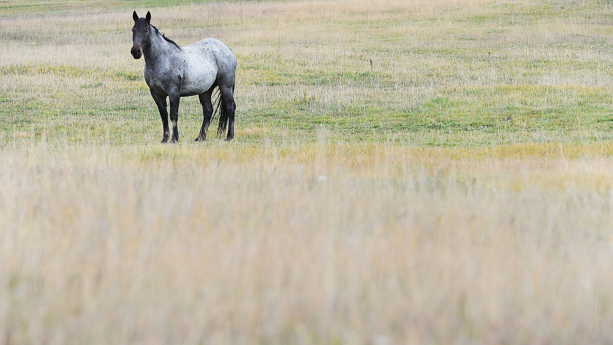 A horse grazes in a field north of Steamboat Springs along Routt County Road 129.