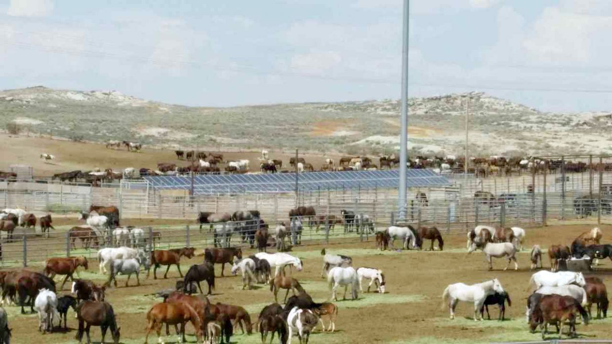 In 2014 hundreds of mares and foals lingered in a BLM temporary holding facility located in Rock Springs, Wyoming.