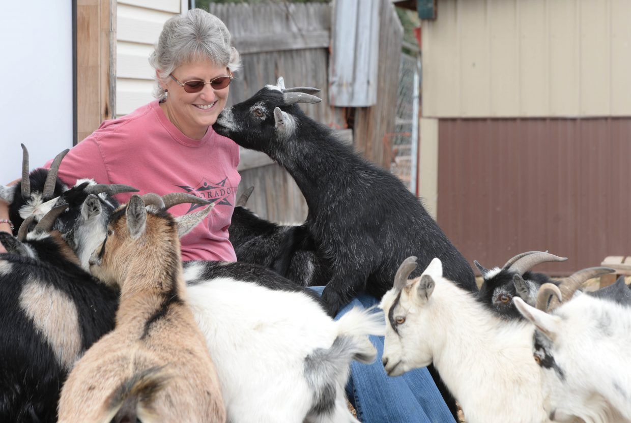 Cancer survivor Andrea Brunton was diagnosed with breast cancer a year ago. During her treatment she continued to care for a herd of pygmy goats on her ranch west of Steamboat Springs.