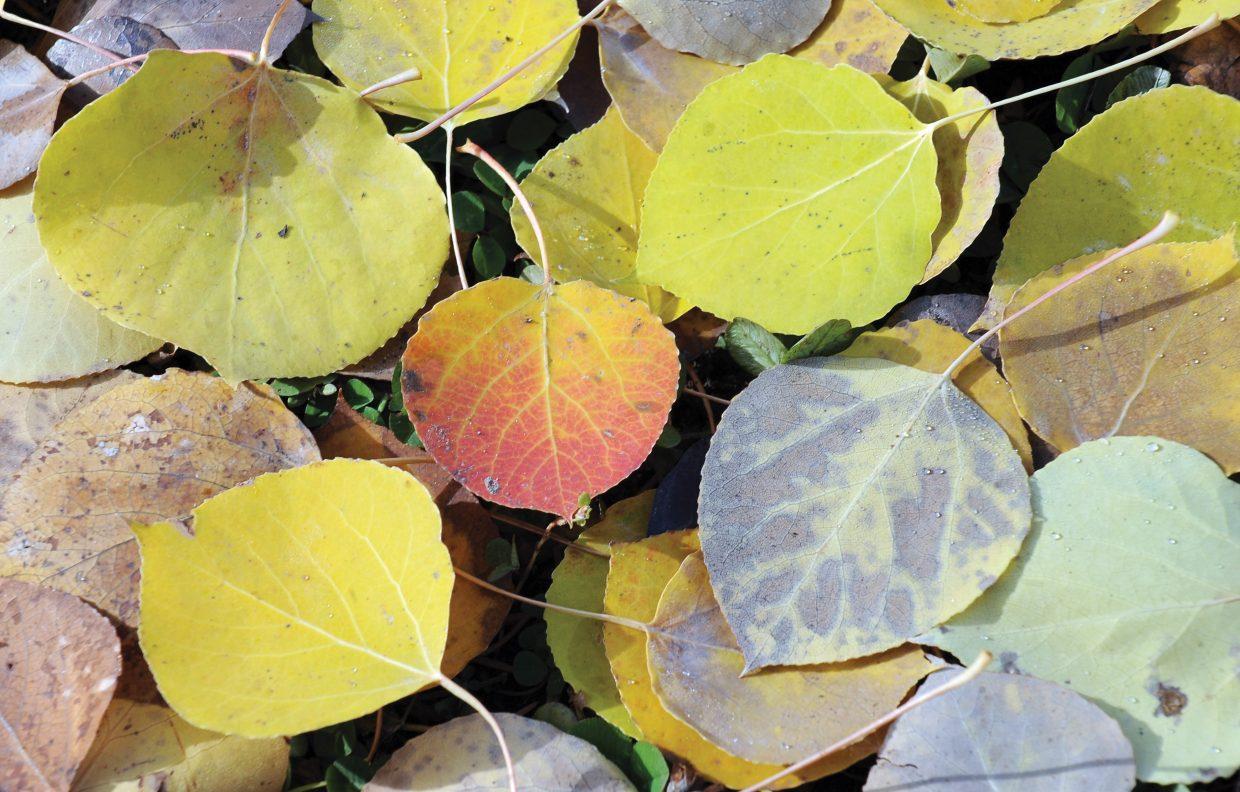 Fallen leaves, still flush with color, line a path near Fish Creek Monday morning.