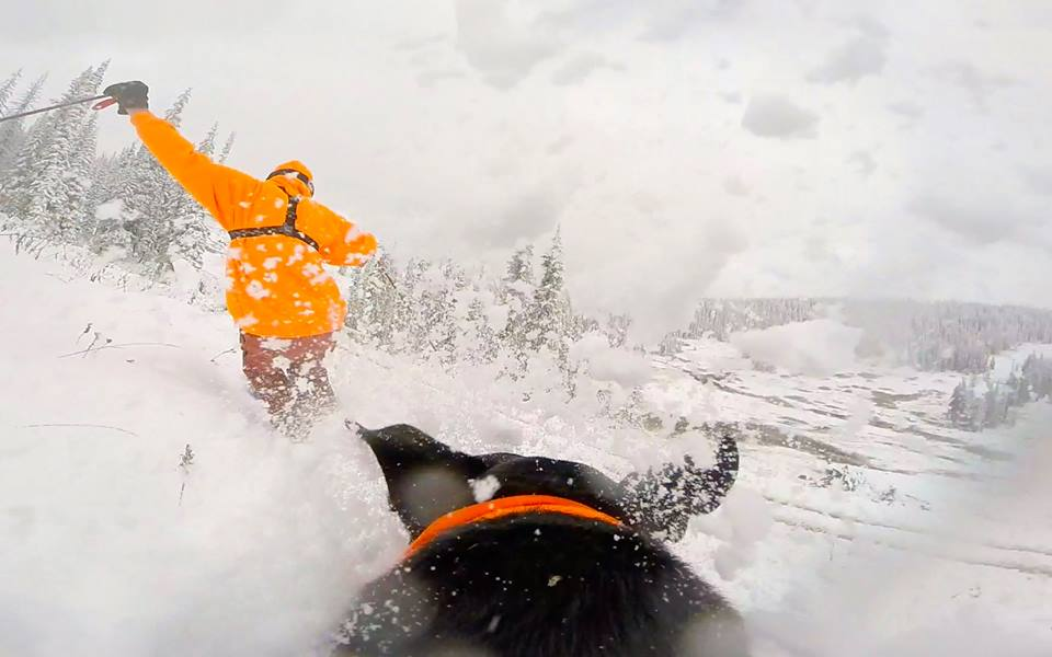 Jack Brown in the orange jacket tests out the snow on Buffalo Pass Wednesday afternoon. Photo shot from a GoPro attached to Derek Guimond's dog, Tuckerman. Photo submitted by Jack Brown.