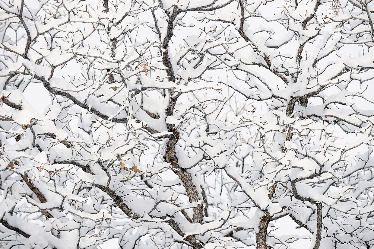 The branches of a tree are partially hidden by Monday's snowfall and gray sky.