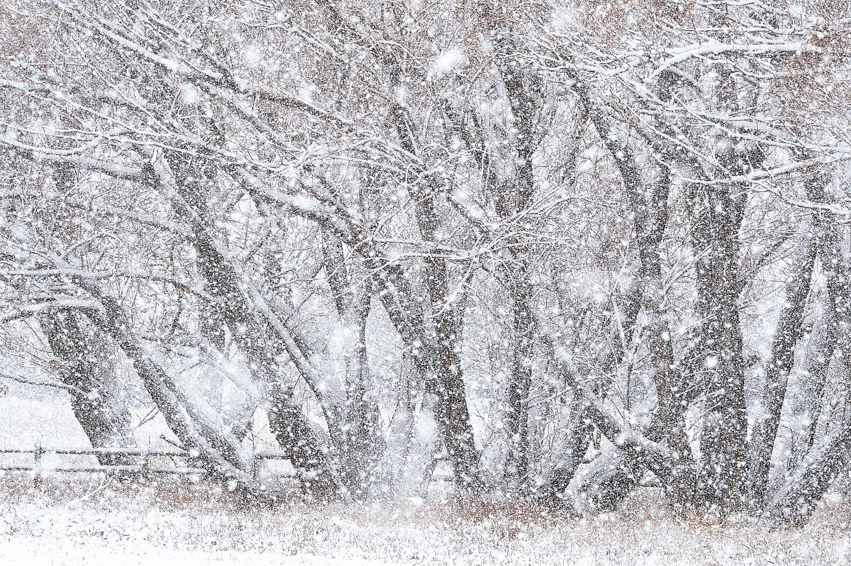 Heavy snow blows in front of a stand of trees near Steamboat Springs Monday afternoon.