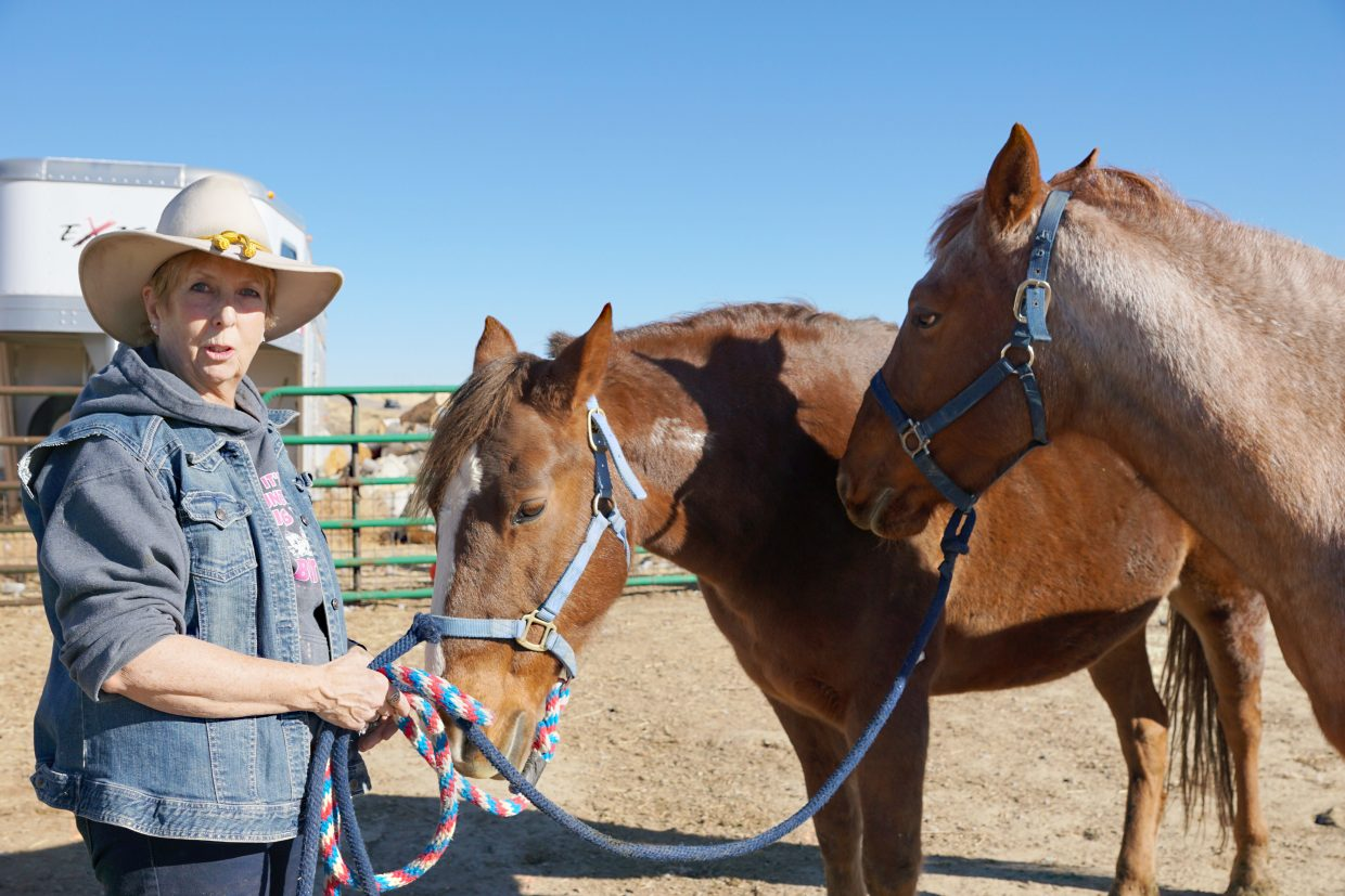 Digger and Fancy — two horses from the Sand Wash Basin wild horse herd — were adopted in 2005, at six months of age.