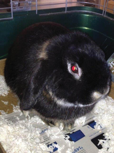 Bun Bun is an 8-month-old soft, cuddly rabbit. He enjoys getting yogurt treats and being held. He has been at the shelter for a while and is looking for his forever home. Come meet him at the Steamboat Springs Animal Shelter or call 970-879-0621 for more information.