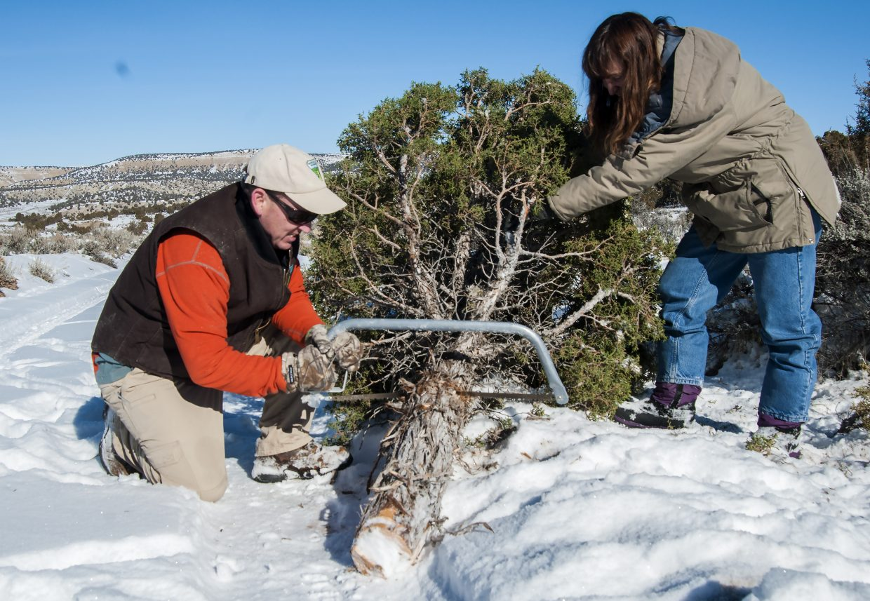 Chris Joyner, public affairs specialist for the Bureau of Land Management Colorado Northwest District, cuts off a length of trunk from a juniper tree harvested from public lands in western Moffat County as Gina Robison, outdoor recreation program lead for the BLM Little Snake Field Office in Craig, steadies the tree. Joyner and Robison hope to see more people take advantage of the opportunity to harvest their own Christmas trees this holiday season for the fun experience it can provide.