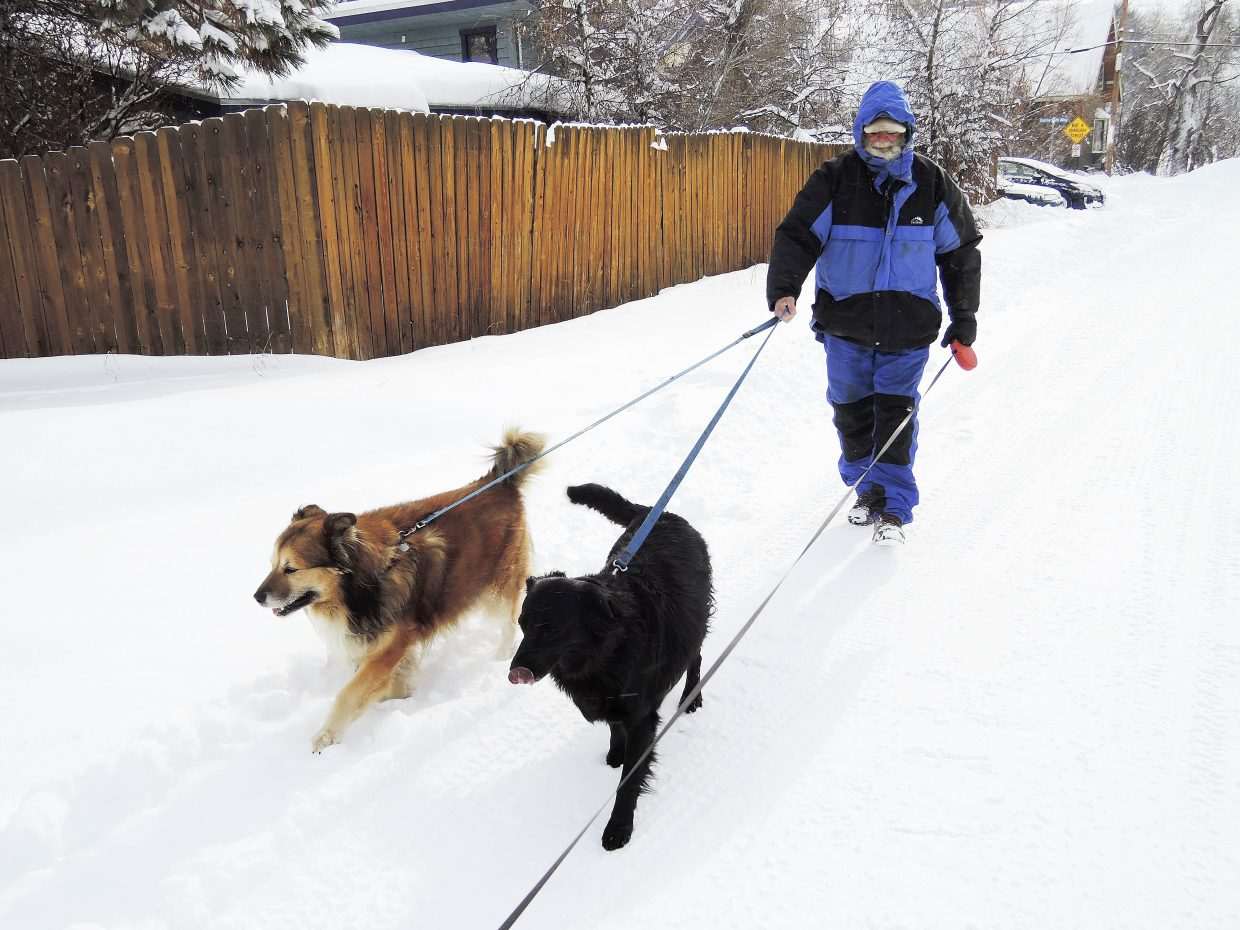 David DelliQuadri was walking his daughter's dog Hailey, right, in Stehley Park on Nov. 25 when it ate something a vet thinks was laced with marijuana.