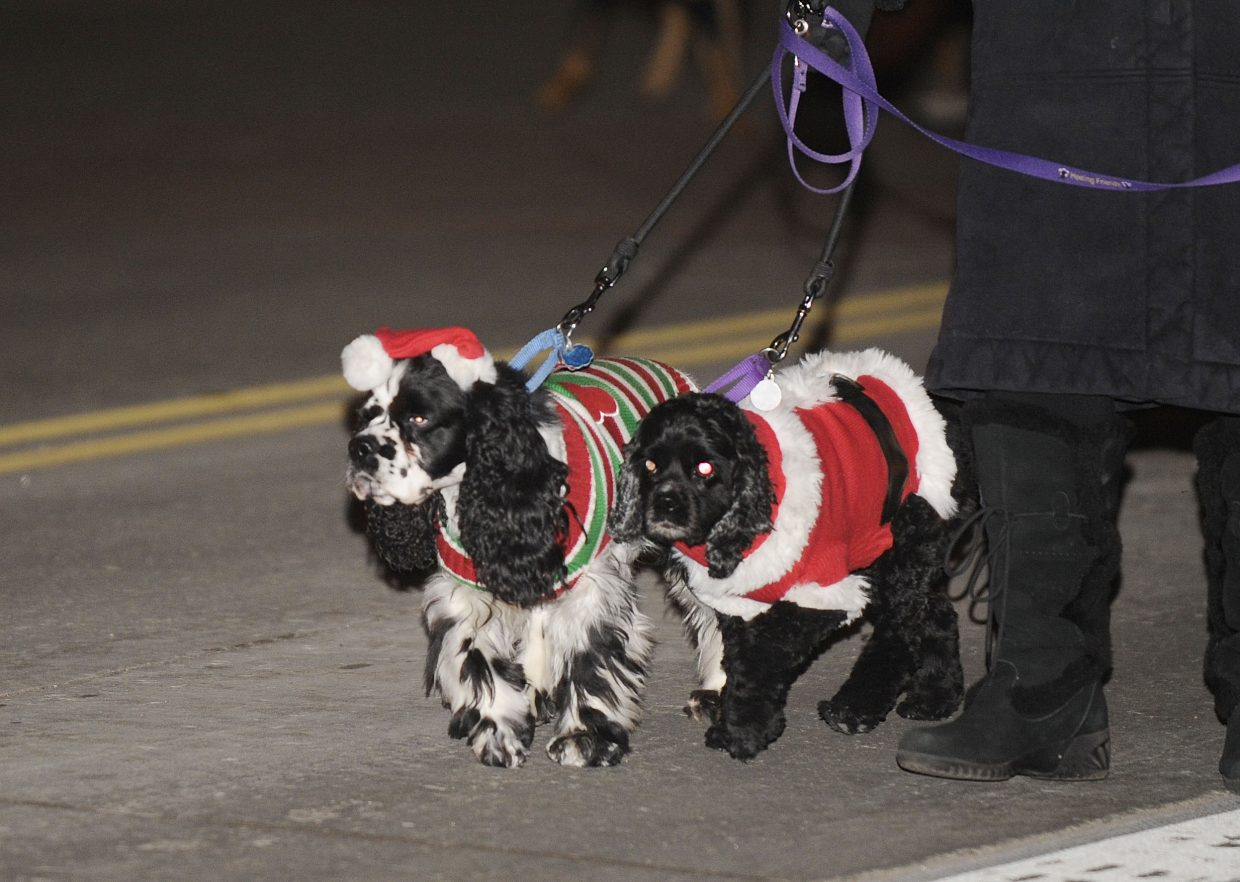 Jake, left, and Josie are walked down Lincoln Avenue during the Merry Mainstreet parade by their owner Roberta Rundell, who volunteers with the Healing Friends organization.