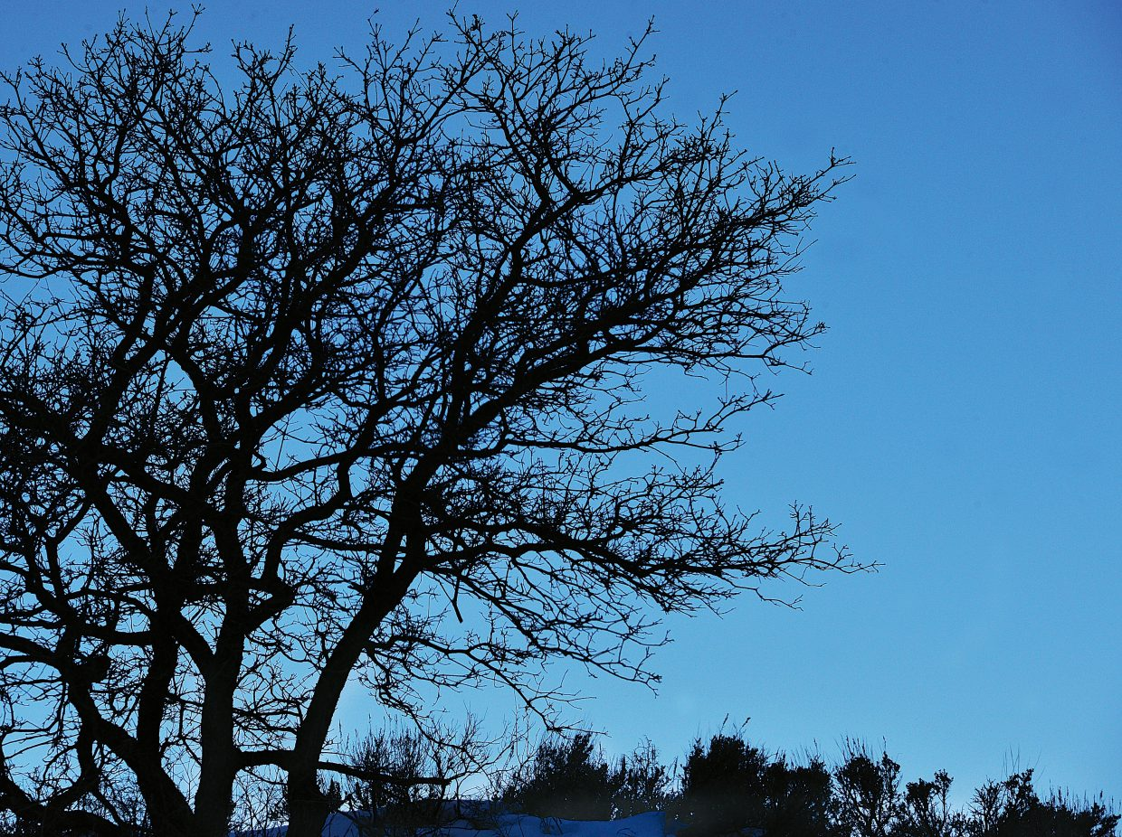 Trees stand against a blue mountain sky Monday afternoon southwest of Steamboat Springs on Routt County Road 33.