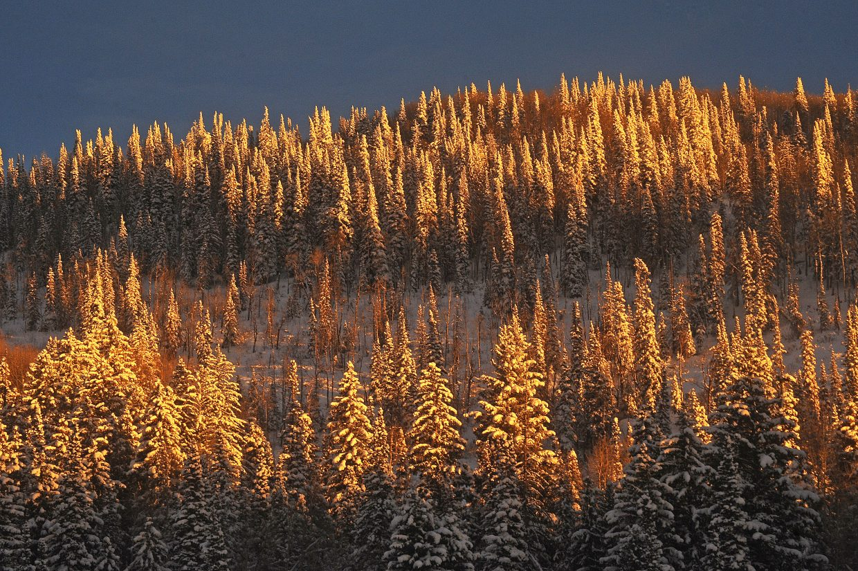 Frosty trees shine at sunset on Buffalo Pass. Daytime temperatures on Tuesday are forecast to rise above freezing.